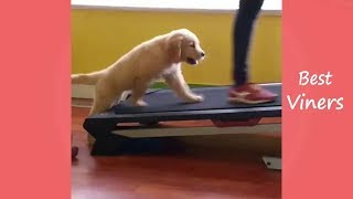 Try Not To Laugh or Grin - Funny Animals Videos & Vines 2019