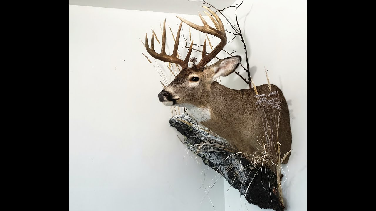 My Deer Mount Habitat Decoration Youtube