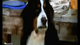 Un perro de otro mundo - #93