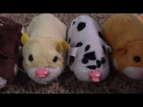 My Duplicate Zhu Zhu Pets!