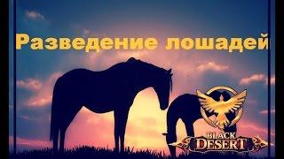 Black Desert Online Разведение лошадей