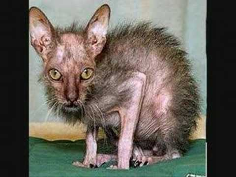 UGLIEST ANIMALS EVER! - YouTube