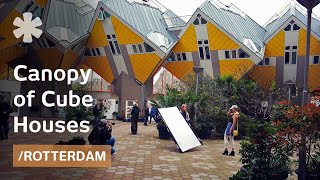 Cube Houses hang on pylons like a forest canopy in Rotterdam thumbnail