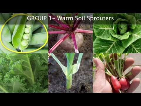 fall-vegetable-garden-planning---choosing-the-best-plants-for-autumn-growing
