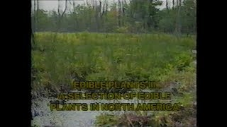 Edible Plants 3: A Selection of Edible Plants in North America  US Army Vintage Film