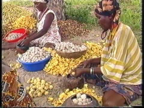 African Lifestyle: Marula Oil