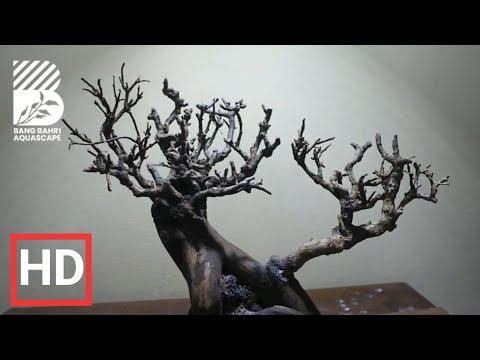 project-20-||-tutorial-membuat-bonsai-aquascape-||-simple
