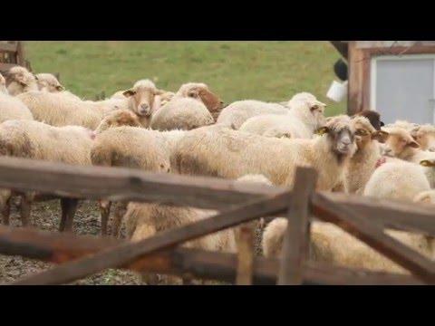 TV5 Monde despre Vrancea