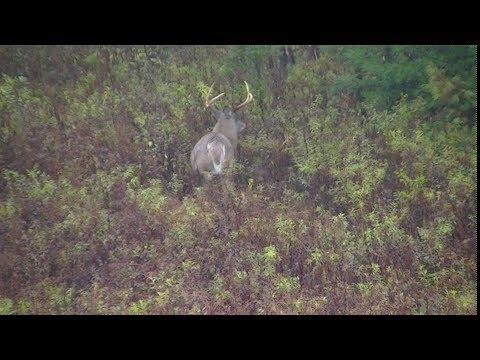 2017 Tioga County PA Bowseason hunt FAIL