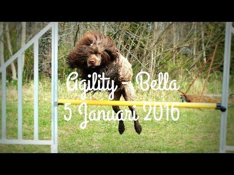 Agility - Bella | Portuguese water dog
