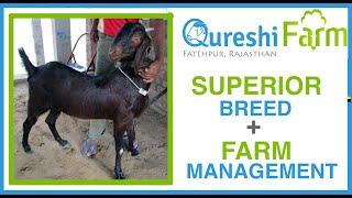 Superior Goats + Good Farm Management = Successful Goat Farmer