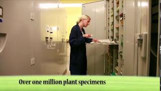 BRIT Herbarium Video 2012.mov