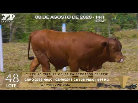 LOTE 48 CORO 2336