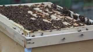 iran bees 314