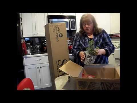 Unboxing Fruit Tree Order From Stark Bros Nursery You