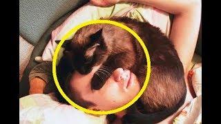 Так вот зачем коты и кошки ложатся на голову: почему я раньше не знал об этом? | #TheRelizzz