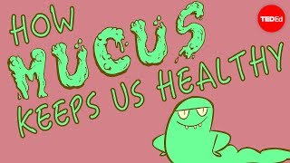 How mucus keeps us healthy - Katharina Ribbeck