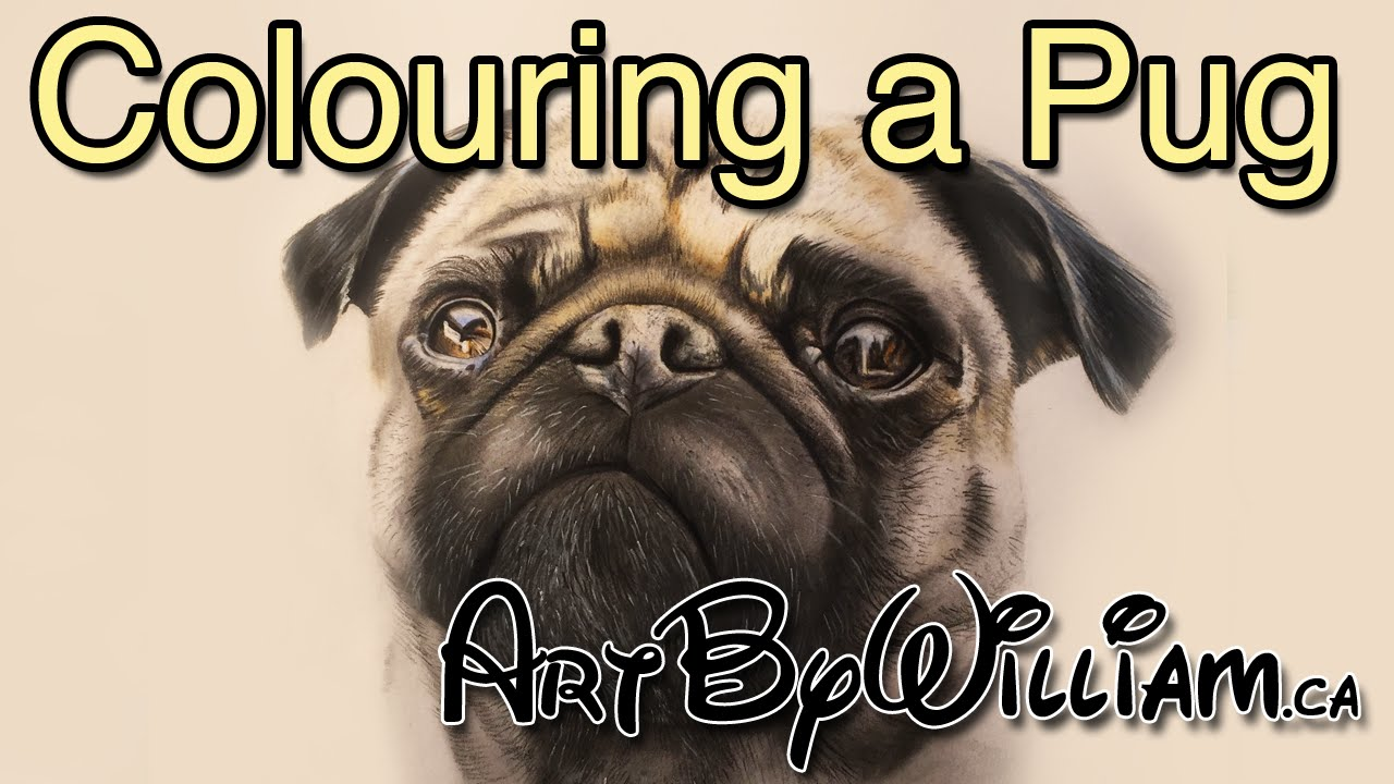 how to color a pug dog in colored pencil and pastel youtube