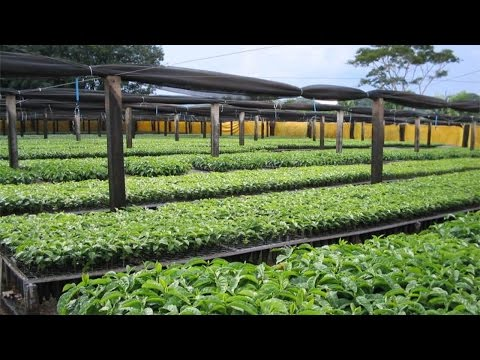 Curso Produção de Mudas de Café em Saquinhos e Tubetes - Construção de Viveiros