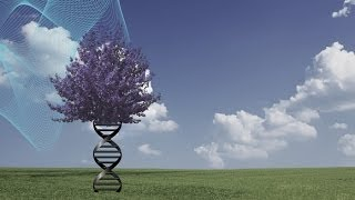 (Trailer) Destiny and DNA: Our Pliable Genome