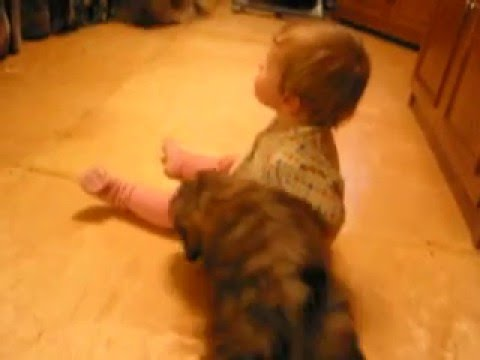 Baby and dog lhasa apso   Младенец и собаки лхаса апсо