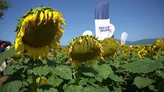 Слънчогледовите хибриди на SAATEN UNION - Открит ден в с. Копринка