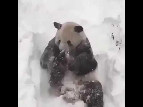 Instagram WhatsApp Üçün Çox Gözəl Çox Maraqlı Status  2019 (Panda) By Ayaz Azeri