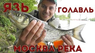 Язь , Голавль на Майского жука, бомбарда, Москва река, Рыбалка С Пашком