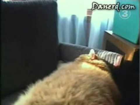 World Fattest Cat