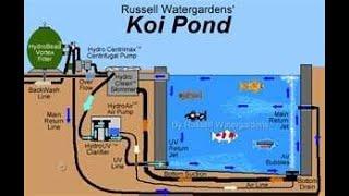 карпы КОИ, рыбки для пруда, ферма, https://koi.cxua.biz