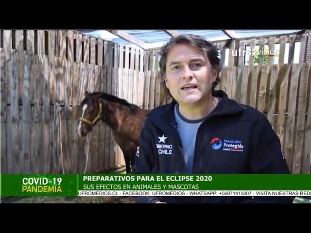 Eclipse 2020: Efectos en animales y mascotas| ESPECIAL COVID-19