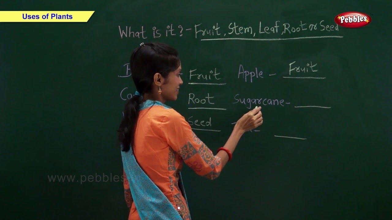 CBSE Class 2 Science : Uses of Plants | Class 2 Science CBSE School  Syllabus Videos | NCERT