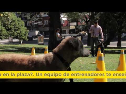 "<h3 class=""list-group-item-title"">Día del animal</h3>"