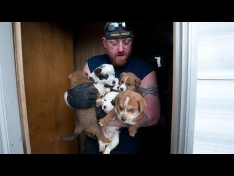 Thumbnail: Animal Rescue Team Rescues Hundreds