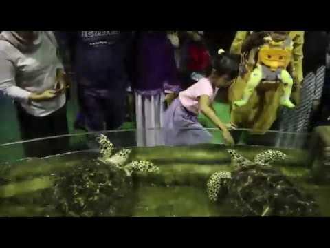 Macam Ikan