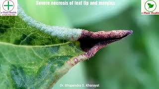 Cucumber mosaic virus (CMV) attack on Zinnia