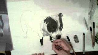 Stafford-shire Terrier Speed Drawing