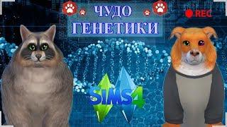 ★ The Sims 4 Кошки и Собаки: Challenge Чудо Генетики: ЛИСА | ЕНОТ★