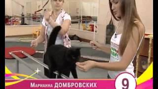 Мисс Екатеринбург в цирке дрессируют кошек