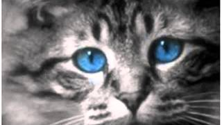 Ojos Azules cat deep blue eyes cats bicolor cats