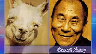 Топ 10 знаменитостей, которые безумно похожи на животных...