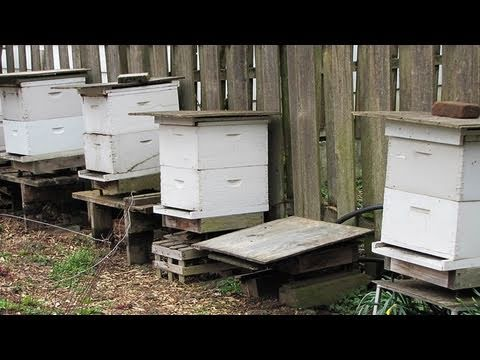 Beekeeping Basics: Equipment For Beginners