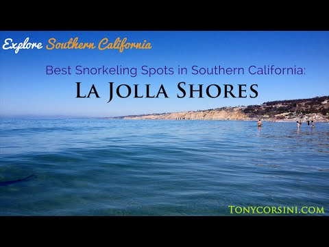 Snorkeling at La Jolla Shores in San Diego, California - Ep. 1: Leopard Sharks & more!