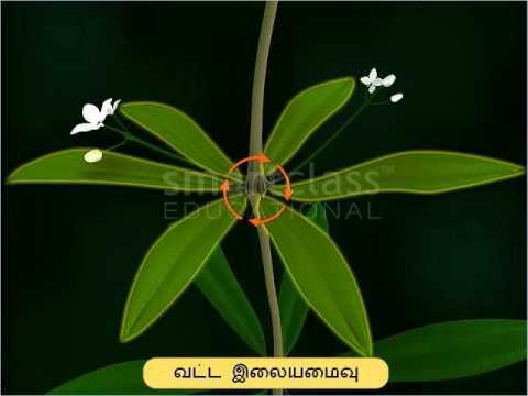 Rubiaceae - Vegetative Parts of Plants (Tamil)