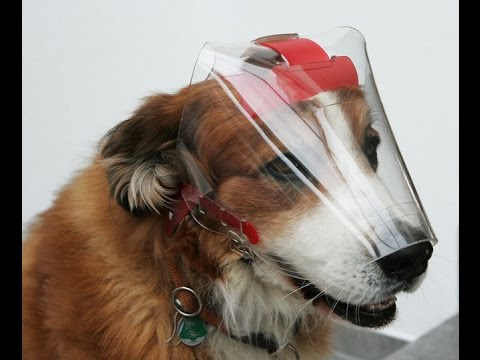 OptiVizor UV Medical and Preventative Eye Wear Protection For Dogs. How To Correctly Apply.