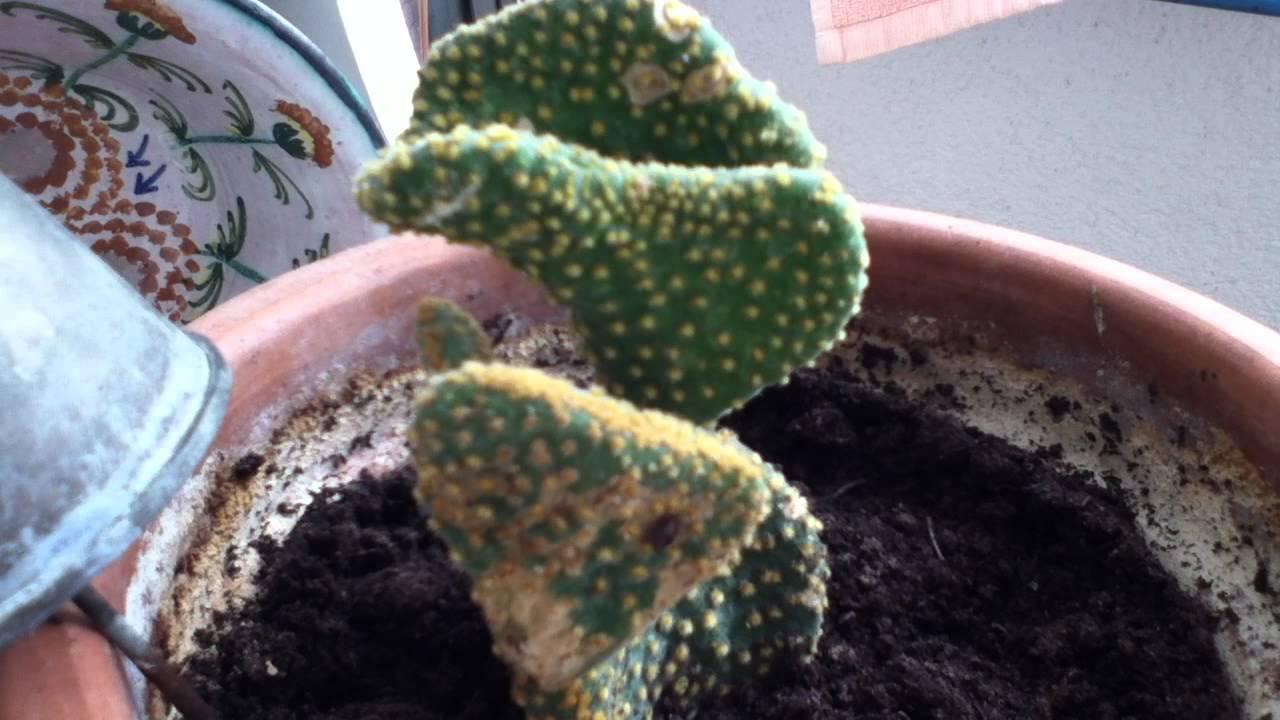 Consejos para el hogar y jard n c mo cuidar un cactus - Hogar y jardin castellon ...