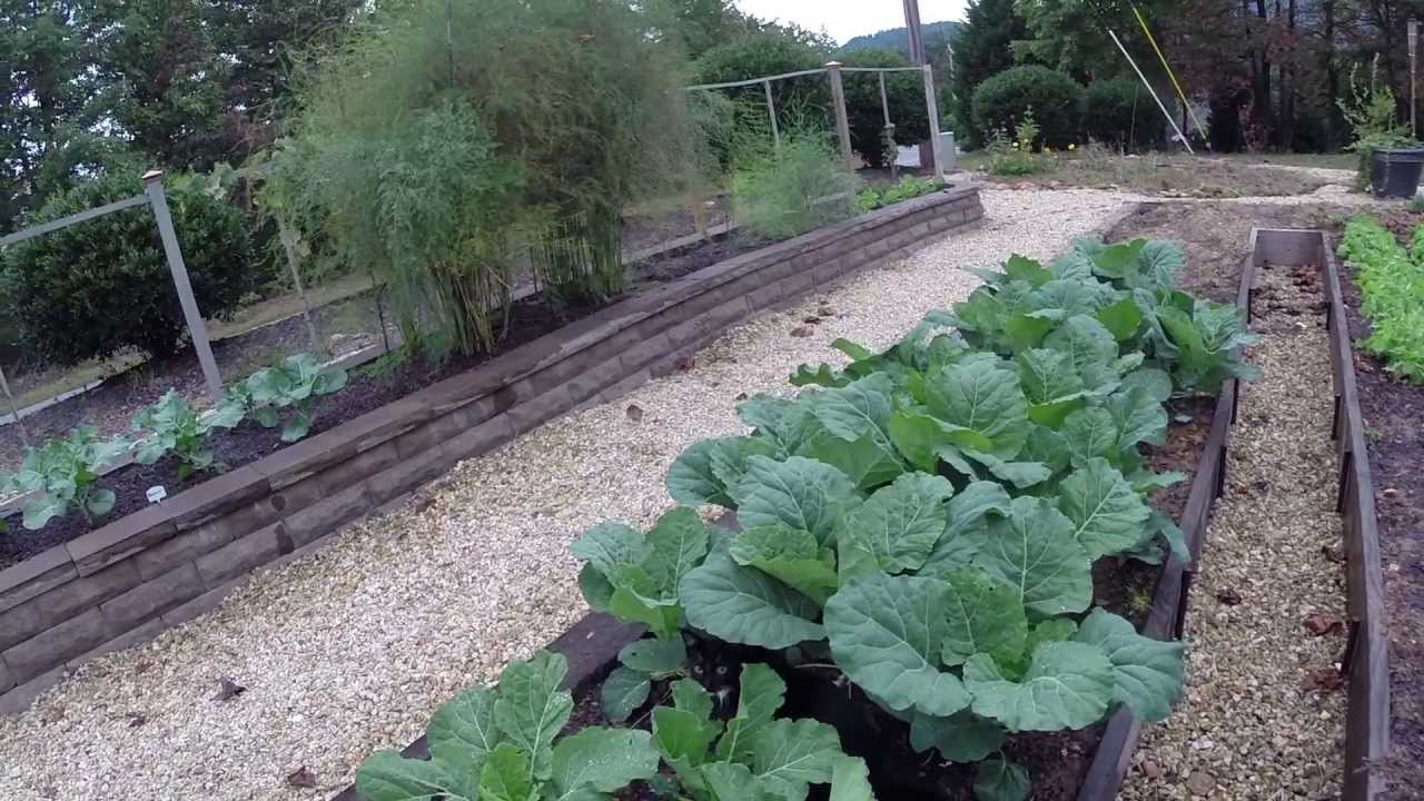 winter garden - growing collards, kale, spinach and broccoli - youtube
