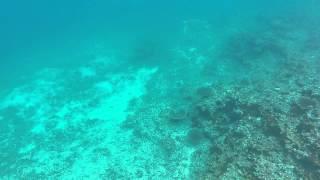 ショノーケルでもウミガメが結構見られます.