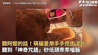 聽阿嬤的話!萌貓愛用手手挖肉泥吃 聽到「神奇咒語」秒低頭乖乖嗑飯