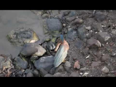 Bird using bread to catch fish